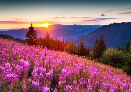 Травы для потенции. ТОП-10 лучших растений для мужчин
