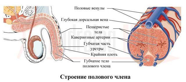 Хронический простатит и камни в простате на что сдавать анализы для выявления простатит