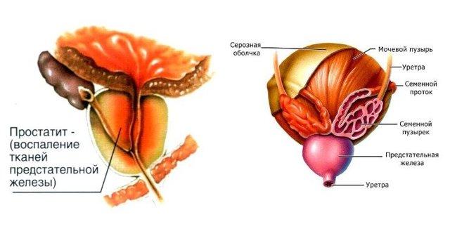 Преждевременное семяизвержение: лечение (препараты), причины, симптомы