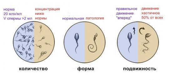 Простатит и зачатие (беременность): влияет ли болезнь на возможность иметь детей?