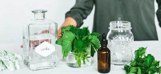 Крапива (семена) для потенции: рецепты, как влияет, отзывы