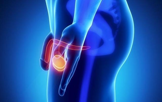Застой спермы в яичках и простате у мужчин: симптомы, последствия, лечение