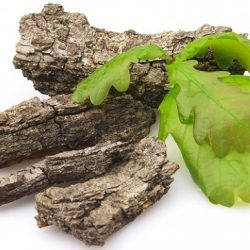 Кора дуба для потенции: рецепты отвара, настойки и чая